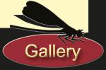 Christian Strixner Gallery